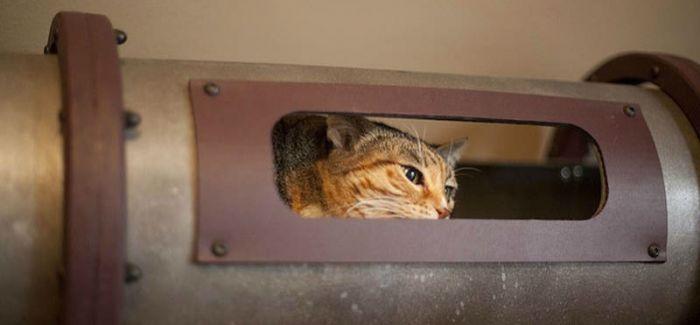 谷歌办公室的设计师给一只猫设计了室内交通系统