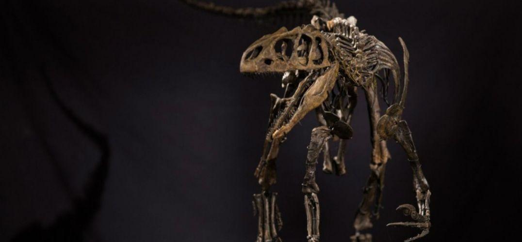 有50万英镑买恐龙多酷 为什么买当代艺术?