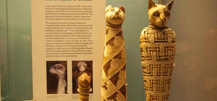 【2015十大艺术发现】古埃及木乃伊造假约三成中空