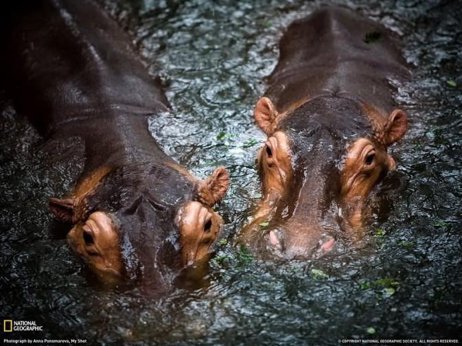 野性绽放:国家地理野生动物摄影佳作