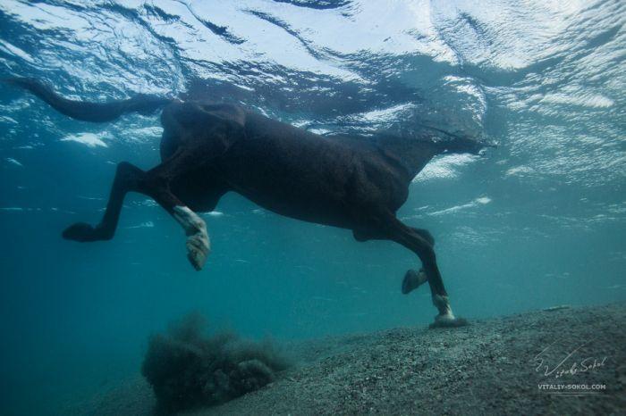 探索神秘梦幻海底世界