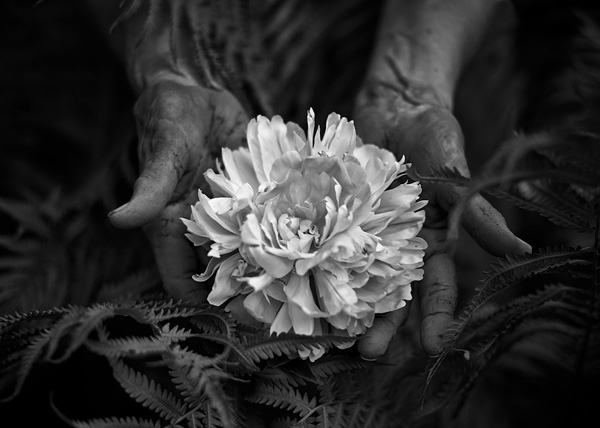 Tytia Habing黑白摄影作品:The Gift