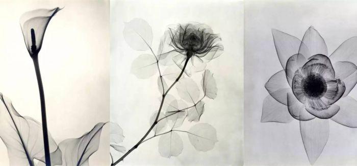 花朵的复古X光片看起来像水墨画