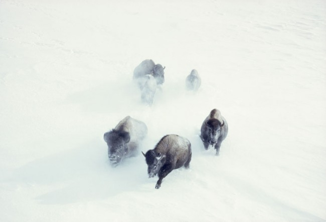 令人屏住呼吸! 20 張《National Geographic》從未公開的攝影作品 10