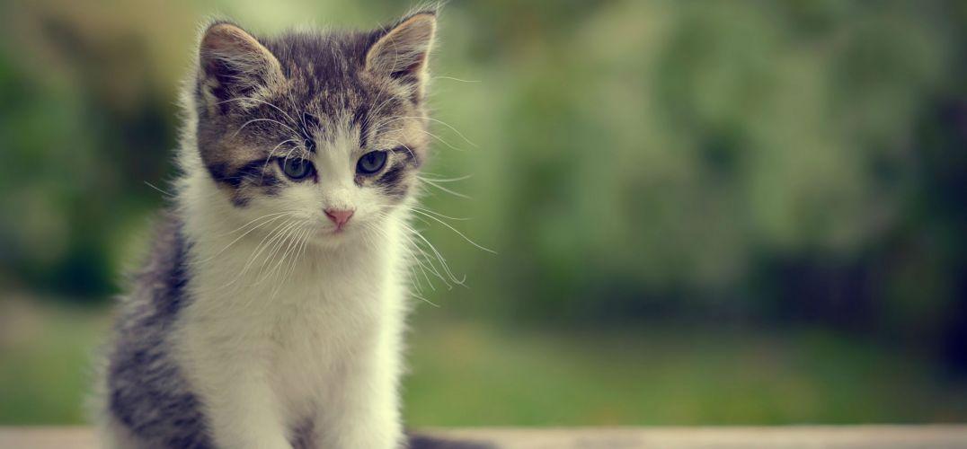 悲伤动物图片萌