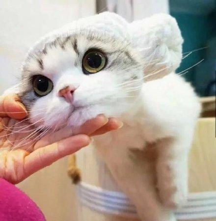 满脸无辜的萌系猫咪 都可以拿去做头像了