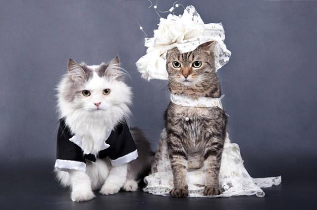 带猫的欧美女生头像