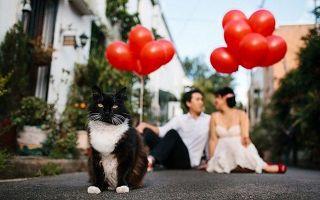 猫奴们  结婚记得带上喵