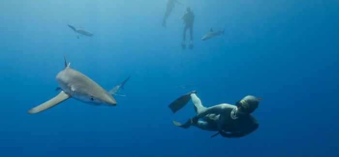 感受海洋深邃之美  2016年度水下摄影师大赛获奖作品