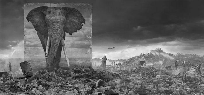 当那些非洲濒危动物出现在工地和采石场