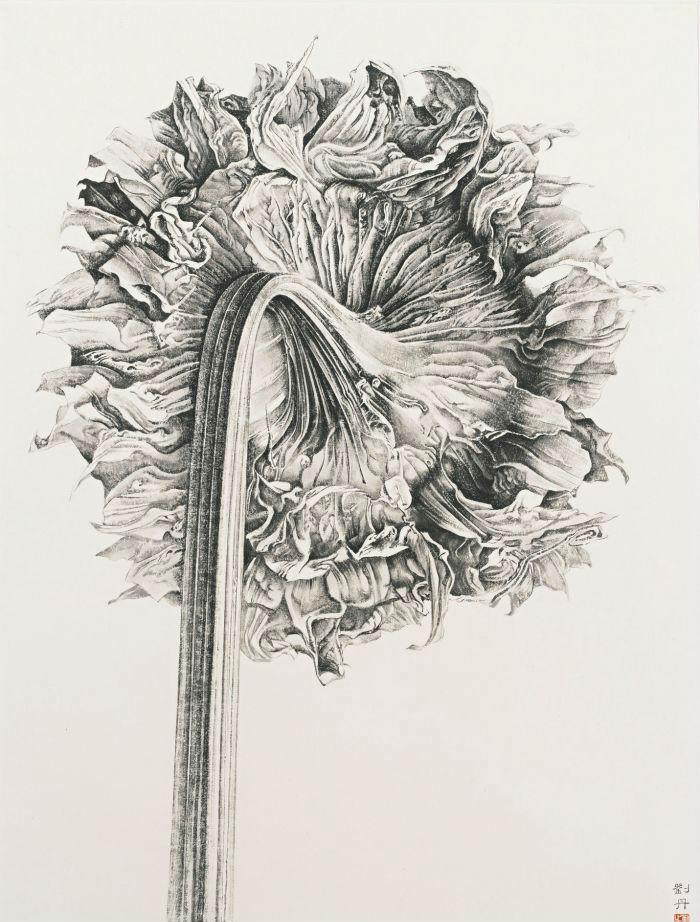 桃花边框铅笔手绘
