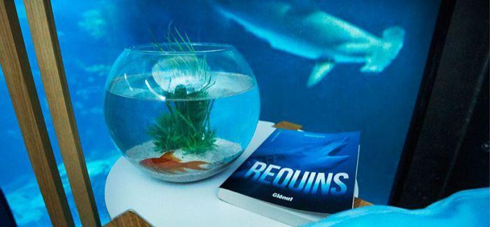 有一个机会可以在水下与鲨鱼朋友共度一晚
