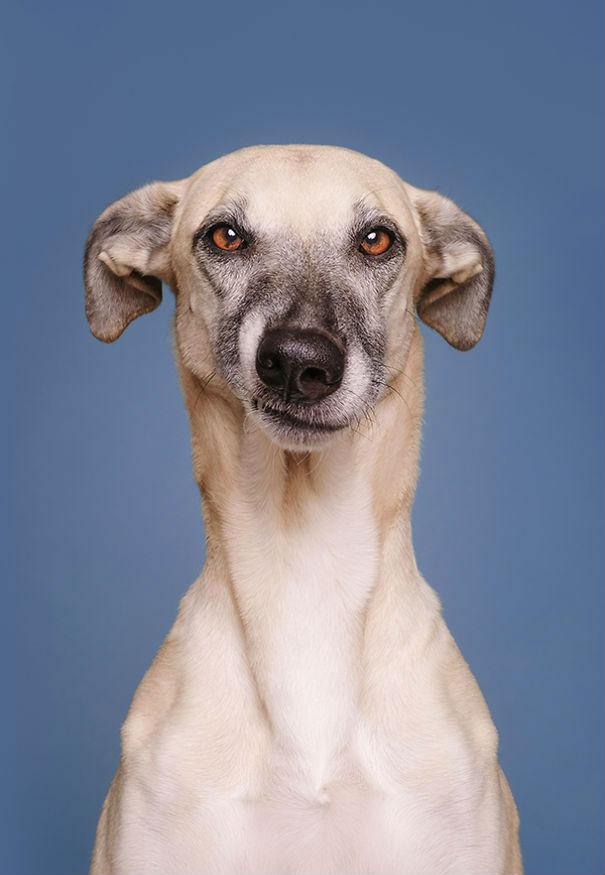 这套朋友表情到没眼神:狗狗用怀疑1的动漫看的腮表情内涵包托图片