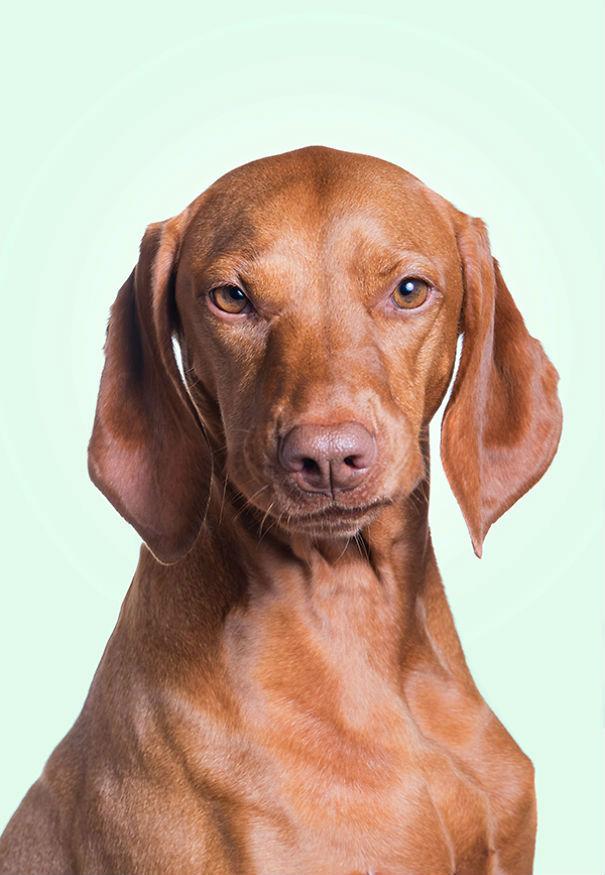 这套表情朋友到没内涵:狗狗用怀疑1的眼神看表情包怂成一团可爱图片