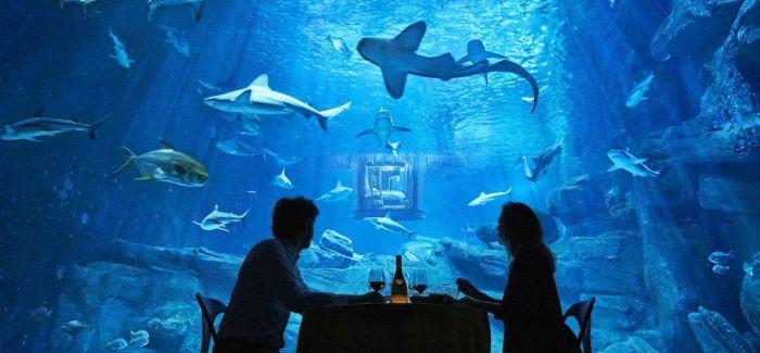 Airbnb准备了一个水下套房  要让你睡在鲨鱼堆里