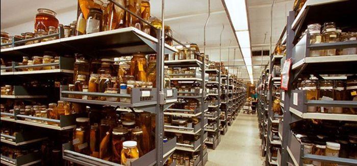 美国国家自然历史博物馆(AMNH)的藏品室