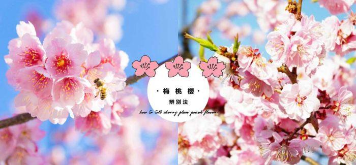 樱花、梅花、桃花永远分不清楚?
