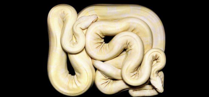 胆小者勿看:美丽的蛇