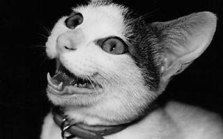 陪伴摄影大师荒木经惟22年  日本最有名的猫Chiro