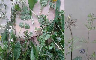 【译界】4月19日:定格植物美好瞬间的瓷砖