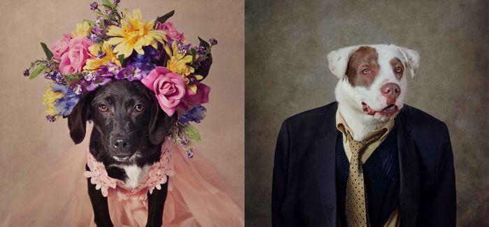 给呆萌的狗狗们也拍一张时尚证件照 每只狗狗背后还有一段故事