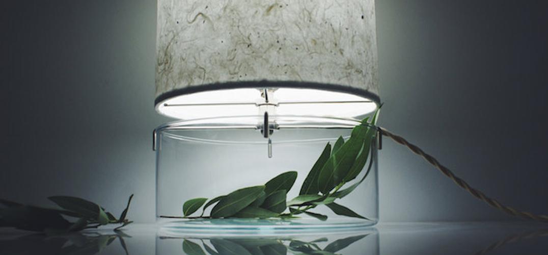 极简主义:把绿植装进你的台灯怎么样?