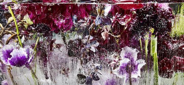 冰封花草这件事 植物艺术家与摄影师的观点有啥不同?