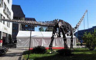 首届化石文化周活动在北京大学召开