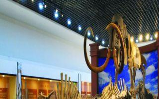 黑龙江省青冈县第四纪古生物化石展:科学、艺术与文化的创新交融