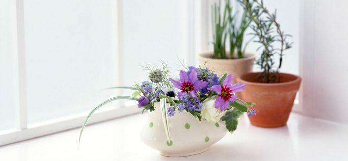 鲜花不仅可以用来装饰  还有如此神奇的功效