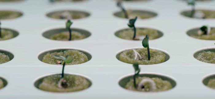 下班后的治愈兴趣!IKEA的设计让新手能轻松在家种菜