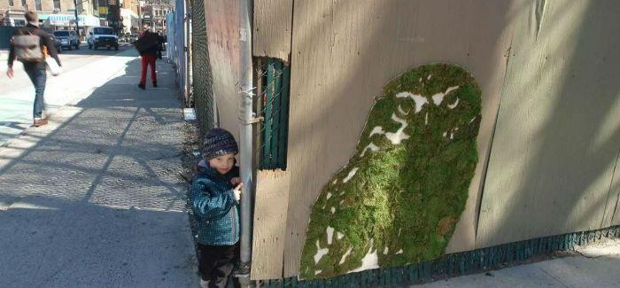 苔藓涂鸦:这也许是世界上最环保的涂鸦艺术