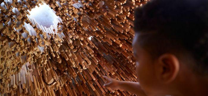 这个树木博物馆像森林 用10000个样本建造