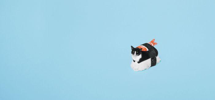 Princess Cheeto:从收容所流浪猫到时尚黑白小猫