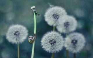 微物之光 用镜头探索蜗牛的奇妙世界