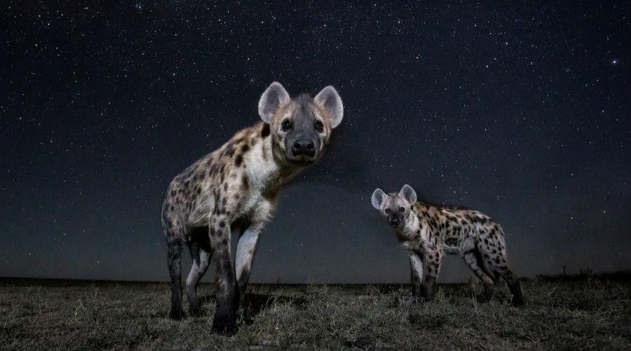 展现夜幕下的非洲动物