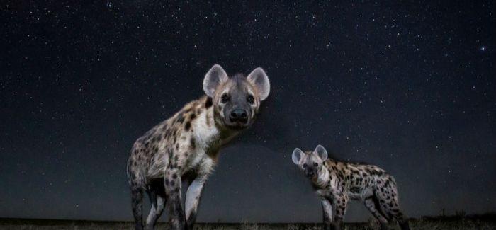13张炫酷照片 展现夜幕下的非洲动物