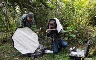 网中鸟和心中爱:野外摄影与鸟类保育