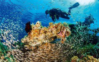 达尔文与上帝分手的地方 潜入加拉帕戈斯深海世界