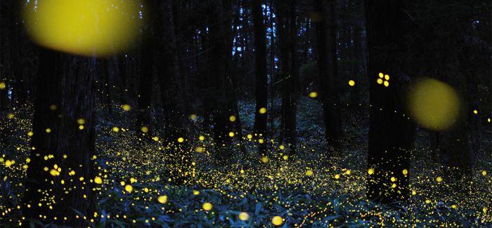 奇幻美景 日本现真实版萤火虫森林