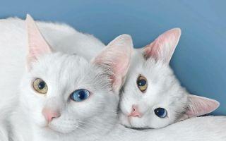 最美的双胞胎姐妹