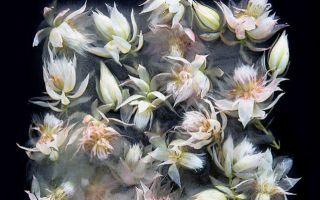 原来冰箱可以创作如此惊艳的花卉摄影