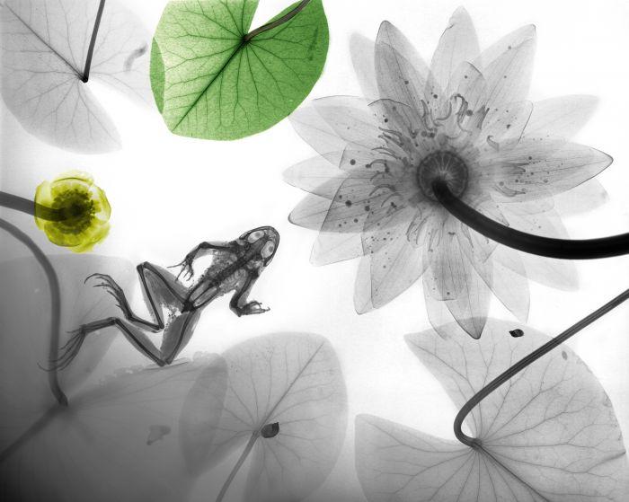 国画青蛙步骤图_百度图片搜索