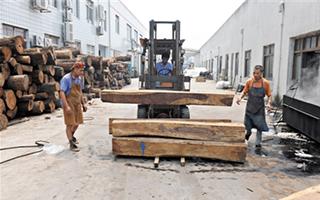 CITES大会召开 多个红木树种国际贸易将受限