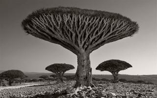 她花了14年时间,拍遍了全球最古老的树….