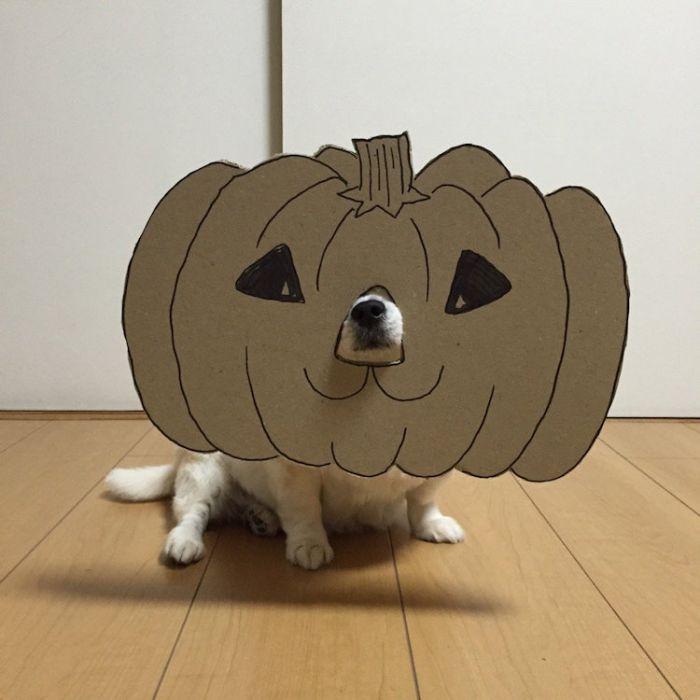 上镜的狗狗结合手工卡纸后的呆萌脸