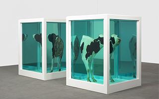 达明·赫斯特新作于威尼斯双年展期间亮相皮诺收藏馆