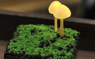 会发光的蘑菇:森林系
