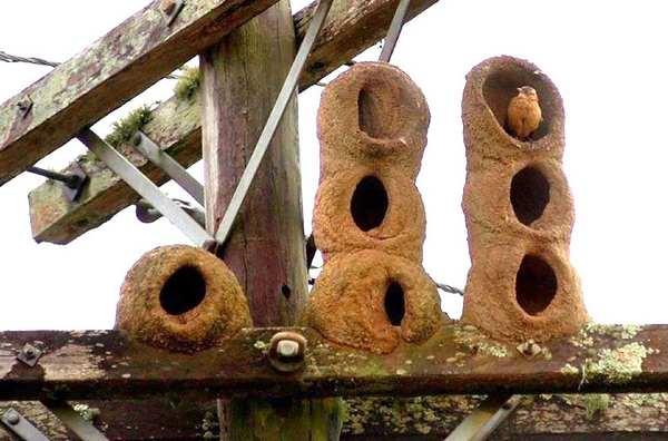 大自然里的优秀动物建筑师