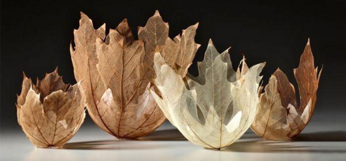 冬天来啦 落叶的艺术你看了吗
